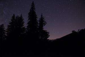 stars pine trees