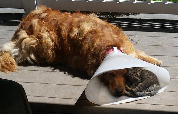 dog cone kitten friend