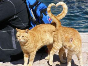 heart cat tails