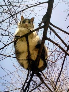cat on branches 2