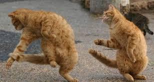 cats dancing